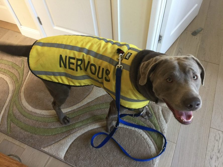Dog no longer nervous