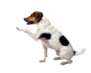 dog-1383342