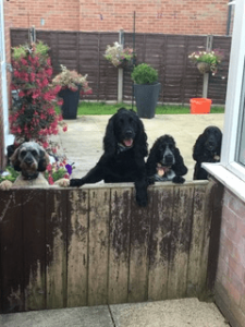 Duke, Millie and Stanley at home