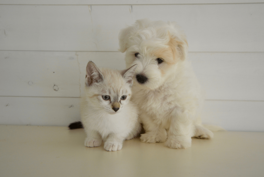 Puppies and kittens are very susceptible to worms.