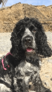 Millie at the beach
