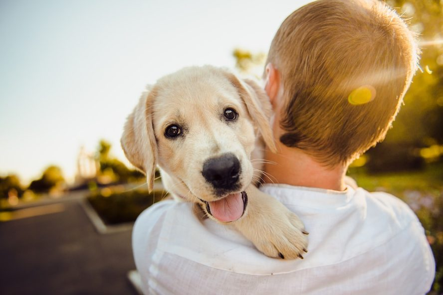 Puppy on owners shoulder