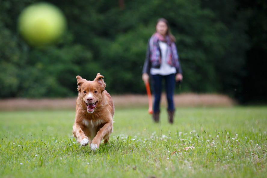 Dog chasing ball