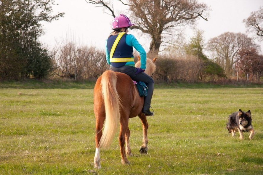 Woman riding a horse in a field with a Border Collie